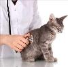 Ветеринарные клиники в Мишкино